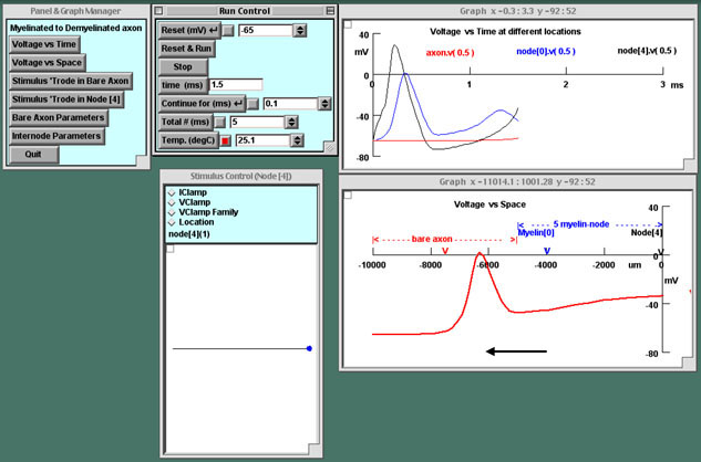 Action potential propagation simulation dating 7